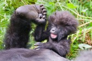 Gorilla Tours