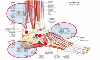 青葦治療院での足首の捻挫に使うツボ