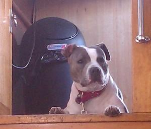 Bella in the hatch