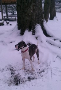 Bella finds a tree to pose in front of