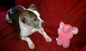 Pink Elephant 1