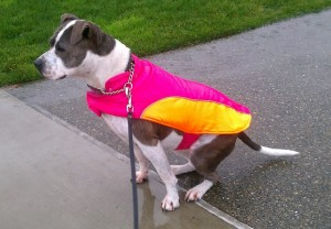 Bella's Raincoat