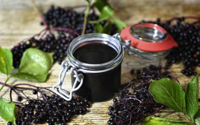 Can Elderberries Fight Colds and Flu?