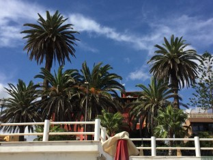 Palmen bei Rom