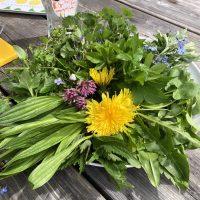 Aus der Natur: Frühlingskräuter für Gesundheit, Schönheit und - Magie!