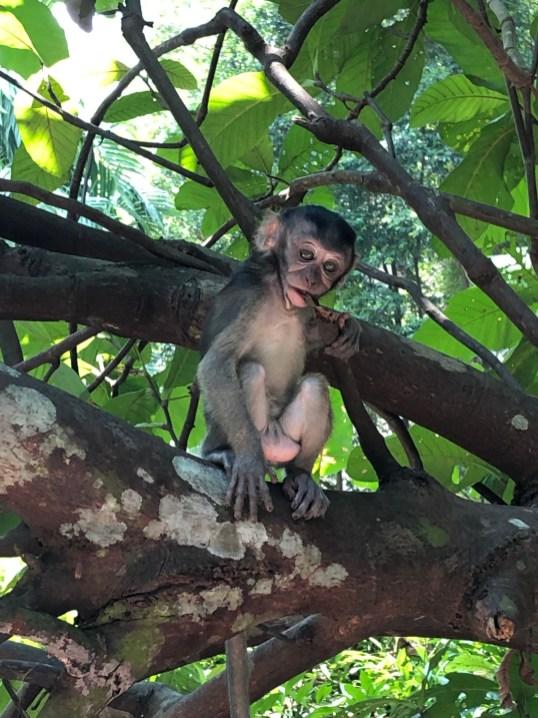 Impression vom Baumwipfelpfad in Singapur