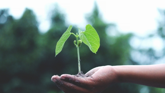 Plant growing in the hands of a young, unseen, child.