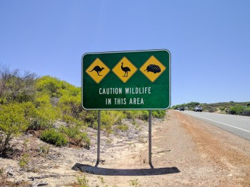 Road sign for kangaroo, emu, and echidna