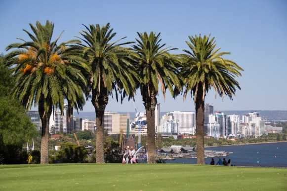 four palm trees in a park with Perth in the background