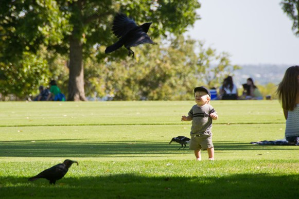 toddler watching birds in a park
