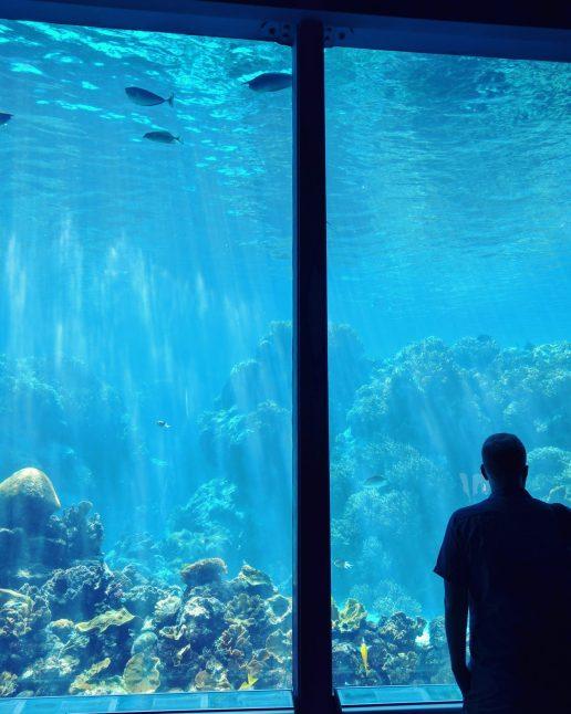Aquariums are always cool.