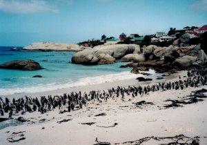 The sweet jackass penguins.