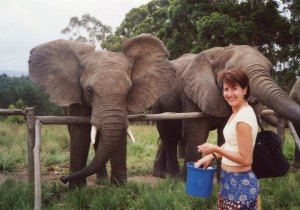 kat elephant feeding