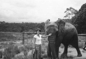 kat elephant