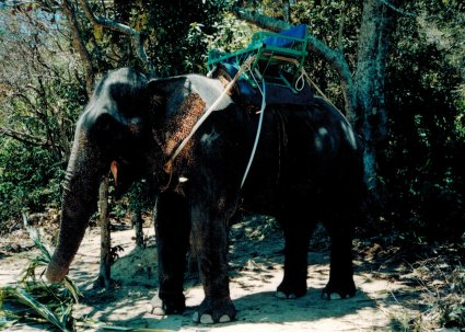 Islands elephant