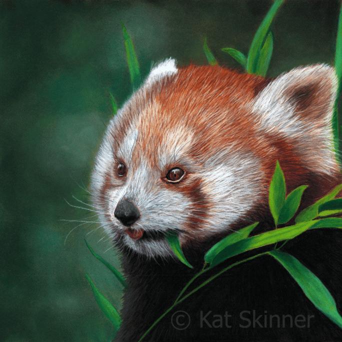Red Panda Painting by Kat Skinner