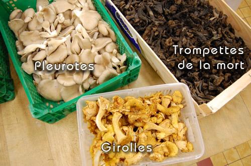 Champignons variés