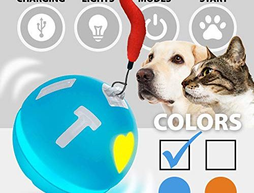 Wicked Ball Smart Interactive Toy for Cats and Dogs, CatsToys.jpg?resize=500%2C380&ssl=1