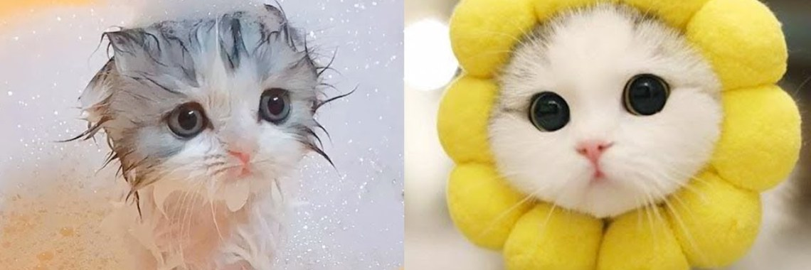 , Best Funny Cats Videos Compilation 2020 Try Not To.jpg?resize=1140%2C380&ssl=1