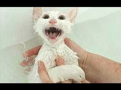 , Cats just don39t want to bath Funny cat bathing.jpg?resize=480%2C360&ssl=1