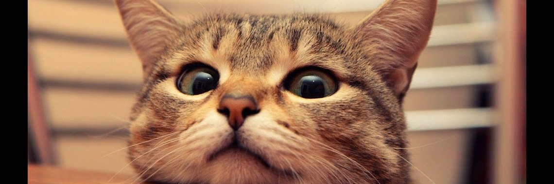 , Try Not To Laugh Challenge Funny Cats Compilation 2020.jpg?resize=1140%2C380&ssl=1