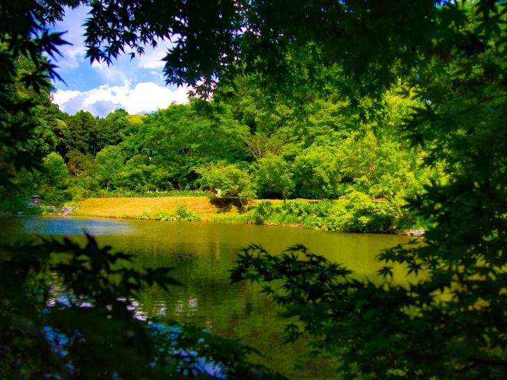園内奥の大池