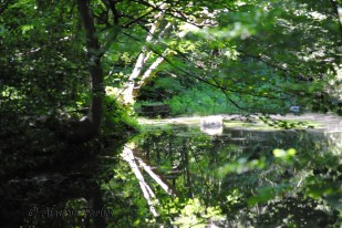 Reflections 9