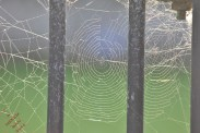 Ducking The Web (5)