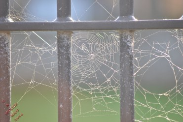 Ducking The Web (6)