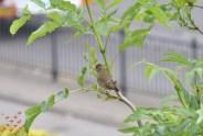 June Birds (2)