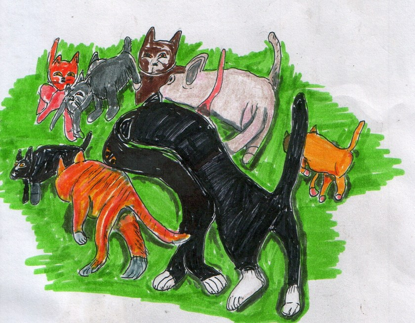 cats-nov-1