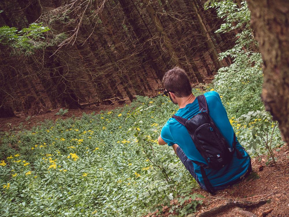 bosco sentiero 203