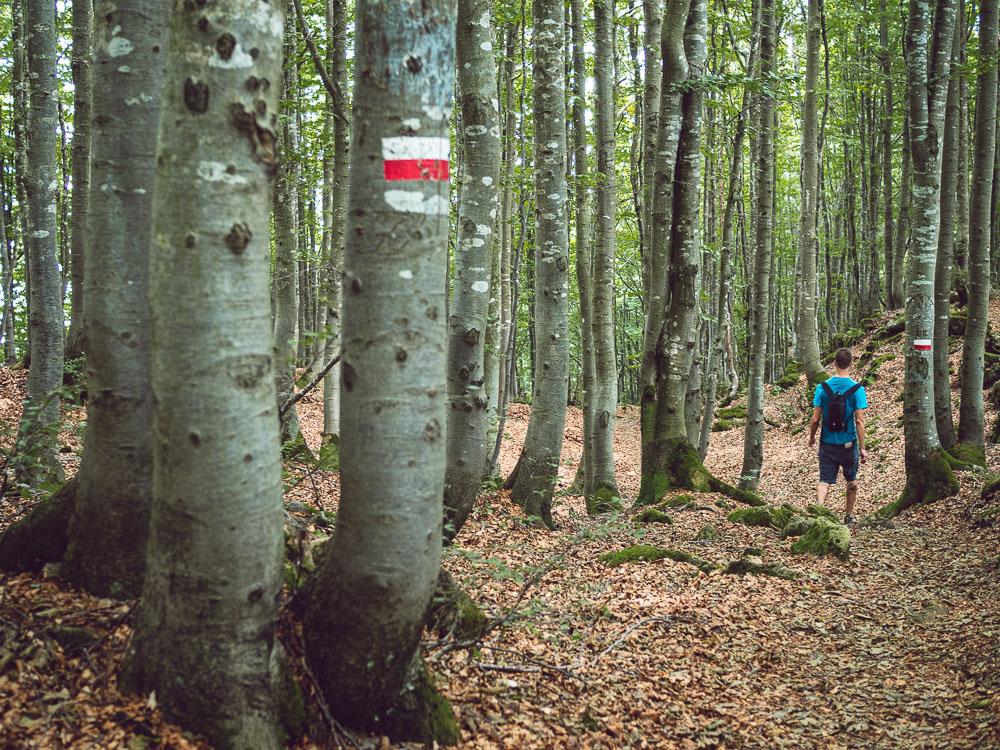 bosco tra montefalcone e cima marana