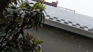 雪と枇杷の樹