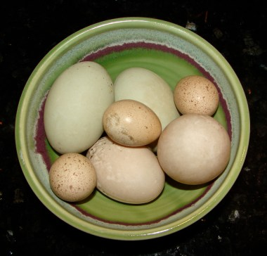 The colors of the eggs astound the artist in me.