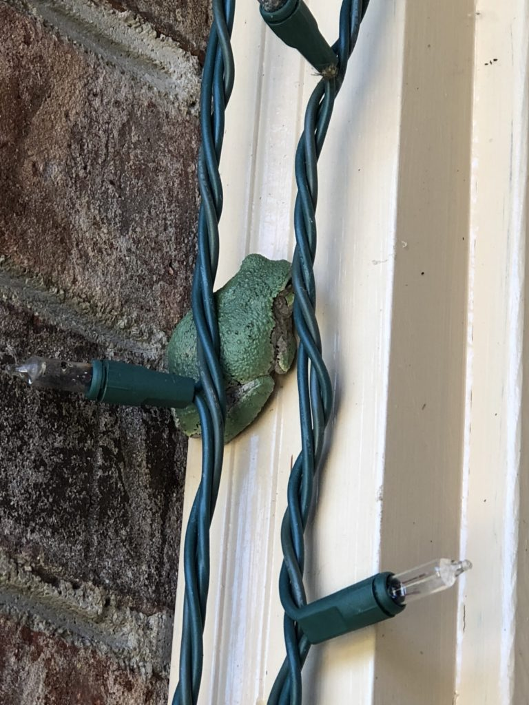 The frog on the door frame but behind the string of lights that wrap around the front door.