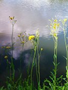 wpid-IMAG0170.jpg