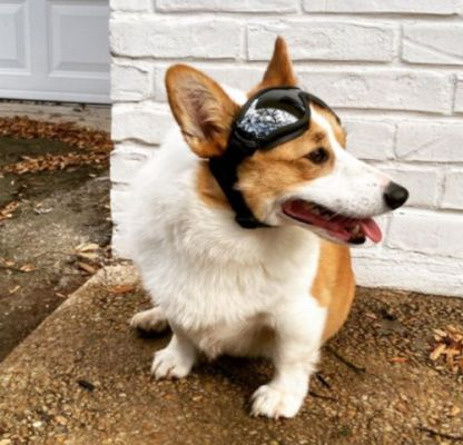 Protective Dog Goggles photo review
