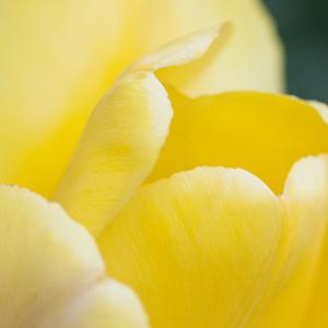 Lahaska in the Spring