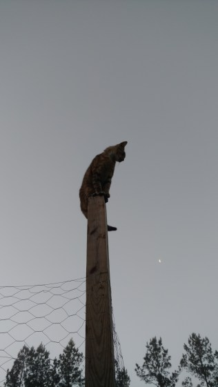 Arthur standing watch