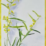 Acrylic Ink on Board native plant painting Autumn Wattle