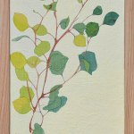 Eucalyptus Sprig Painting Acrylic Ink and Gouache on board Framed