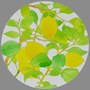Acrylic Ink on round Wood Panel Fresh Crop Lemons