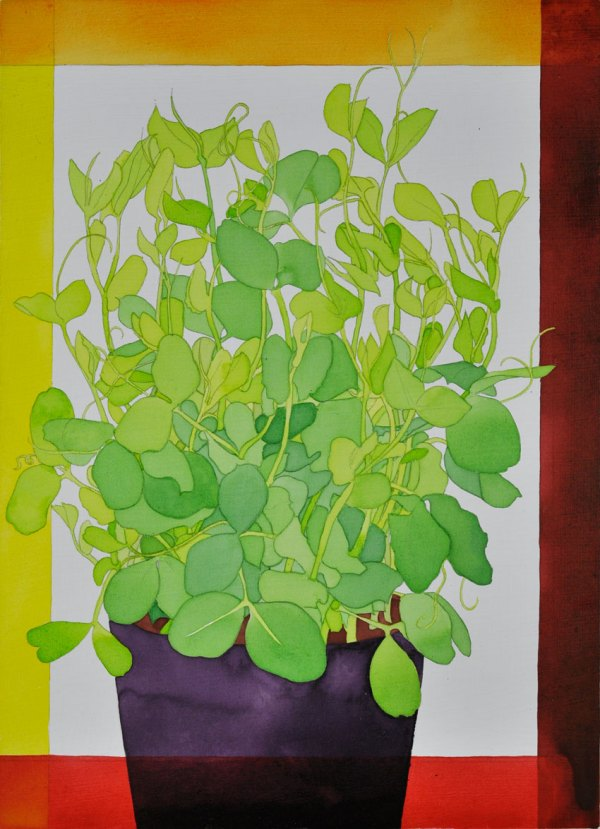 Acrylic Ink Painting on Board Richard's Pea Sprouts