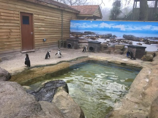 Paradise Wildlife Park Review 7