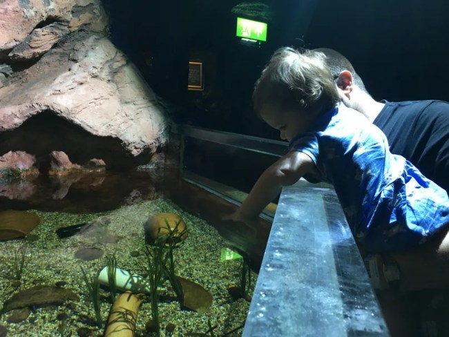 Sealife Adventure Southend - Daisy trying to play with the fish