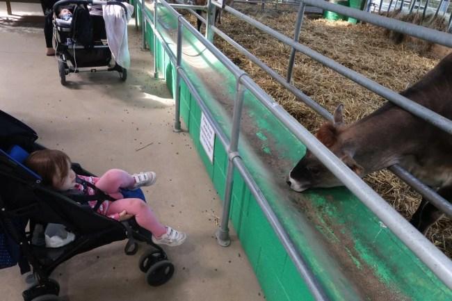 Daisy visiting animals at Willow's Farm