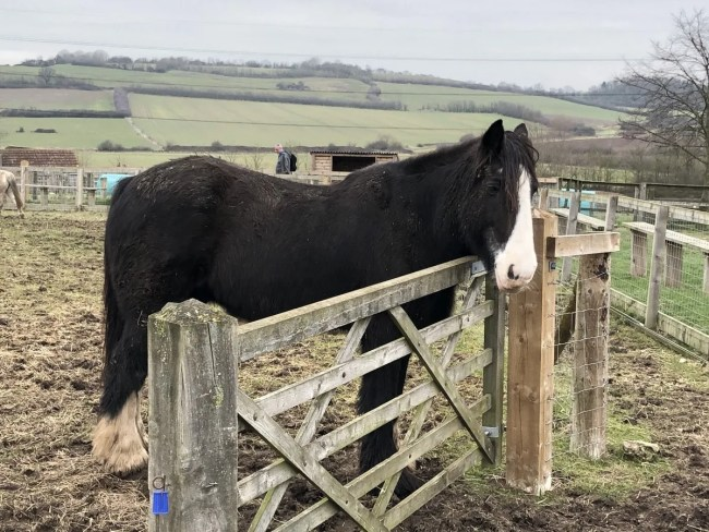 Lee Valley Park Farms - Horse in paddock