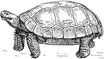 wiki cc 640px-Tortoise_(PSF)
