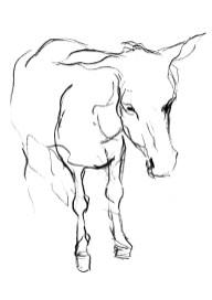 Hydra Donkey